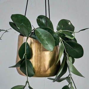 Atsu Brass Hanging Planter – Large